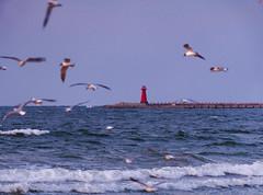 Harbour lighthouse in Gdańsk (mmichalec) Tags: harbour lighthouse beacon gdansk seagull sea baltic morze latarnia latarniamorska port