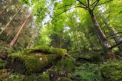 """Green Paradise"" Forêt Vosgienne (Thomas Vanderheyden) Tags: forest foret nature beautifulearth vert vegetal green arbre tree mousse fujifilm thomasvanderheyden colors couleur paysage landscape ngc france"