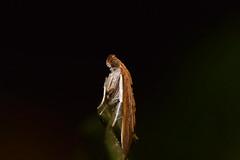 Moth (Craig Tuggy) Tags: insect macro kao yai nature thailand