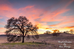 Cool California Oak (Ben Sheriff Photography) Tags: cool california northerncalifornia californiastatepark auburn auburnstaterecreationarea oaktree oak winter december grass field sunset clouds sky nature hike eldoradocounty