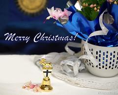 Merry Christmas! Hyvää Joulua! God jul! (gustaf wallen) Tags: wishingfromrudolphtherednosedreindeerland finland suomi blueandwhite whiteandblue north nordic nordiccountry fatherchristmasland landofthefatherchristmas merrychristmas merry christmas hyvääjoulua god jul godjul