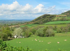 Photo of Westbrook: above Wye and Golden valleys