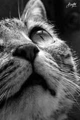 (frogghyyy) Tags: kitty cat gatto animal nature animaledomestico animals animali monochrome monocromo bw biancoenero blackwhite macro macrophotography macroscene macros details dettagli reflection reflections nose animale ritratto