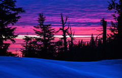 Sunset behind trees at Crater Lake, Oregon (klauslang99) Tags: klauslang winter crater lake oregon sunset trees snow landscape