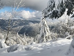 Snow land (The Papa'razzi of dogs) Tags: white landscape winther tree snow