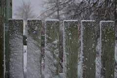 Lumi Rakveres (anuwintschalek) Tags: nikond7200 18140vr talv winter january eesti estland estonia rakvere lumi schnee snow 2019 lumesadu tuisk schneefall snowfall tänav street strasse zaun fence