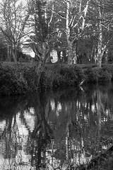 IMGP9329 (Brian H Whittle) Tags: blackwhite leedsliverpoolcanal rufford canal