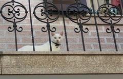 Cats of Porto (VI) (Elisa1880) Tags: cat cats katten kat poes porto portugal animal pet dier huisdier