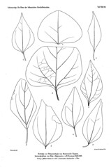 beitrgezurpal02wien_0201 (kreidefossilien2) Tags: velenovský bohemiancretaceousbasin bohemian czech republic palaeobotany flora kieslingswalde