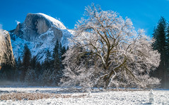 Yosemite Half Dome Elm Tree! Colorful Clouds Sunrise! Sony A7R2 Yosemite National Park Winter Snow Tunnel View  Snowy Rocks! Yosemite NP Dr. Elliot McGucken Fine Art Snow Photography!  Sony A7R II & 16-35mm F4 Carl Zeiss Wide Angle Lens! (45SURF Hero's Odyssey Mythology Landscapes & Godde) Tags: yosemite colorful clouds sunrise nikon d850 national park winter snow tunnel view bridalveil falls el capitan snowy rocks np dr elliot mcgucken fine art photography sony a7r ii 1635mm f4 carl zeiss wide angle lens high res 4k 8k photos