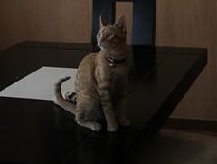 Napoleón (jorluis3098) Tags: gat canon cam pose domestic animal life like cat kat