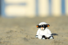 Dale's big day out (Explored) (hehaden) Tags: sheep toy sand beach beachhuts bokeh westwittering sussex