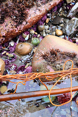 2019_01_03_0131-PS (DA Edwards) Tags: northern california pacific ocean tidepool rocks salt point beach seaweed da edwards photography winter 2019 color sonoma coast