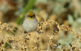 Verdin: Spreading My Legs!