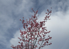 A promise of spring in February (snow41) Tags: spring february promise blossom tree sky akob