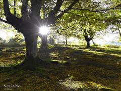 Recordando el otoño (azucena G. De Salazar) Tags: otoño bizkaia basquecountry euskalherria trees arbol hayedo otzarreta
