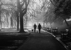 Misty morning walking the dogs (raymorgan4) Tags: misty foggy dogs dog walking walker jogger runner roathparklake cardiff trees winter cold grey canon 77d 50mm