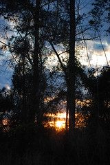 Monday Evening. (dccradio) Tags: lumberton nc northcarolina robesoncounty outdoor outdoors outside nature natural sky tree trees woods wooded forest march monday spring springtime evening mondayevening goodevening nikon d40 dslr settingsun sunset sunlight sun sunshine cloud clouds