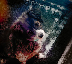 Her Master's Voice (Colormaniac too - Many thanks for your visits!) Tags: dog cutedog rescuedog pet animal domesticanimal canine indoors digitalpainting colorful topazstudio netartll hss