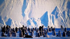 The land of penguins (Luc1659) Tags: pinguini artico land alba ghiaccio ice penguins freddo tv