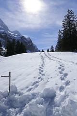 Der Schnee am Säntis