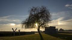 líneas de luz. _DSC2859 (Rodo López. Fotero... instantes en un clic) Tags: arbol sol elbierzo españa explore excapture spain stree nikon nostalgia naturebynikon arcoiris contraluz atardecer invierno