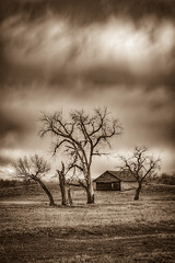 Winter's Gloom (CTfotomagik) Tags: winter gloom mood atmosphere trees shed country countryside landscape field farm ranch nikon tamron wide angle decay overcast cloudy drama