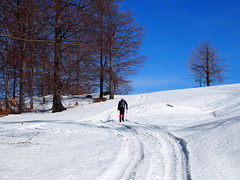 dombra fel / up the hill (debreczeniemoke) Tags: tél winter hó snow túra hiking erdő forest fa tree hegy mountain gutin gutinhegység gutinmountains domb hill olympusem5
