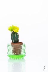 Cactus (jannaheli) Tags: suomi finland helsinki tuotevalokuvaus productphotography kaktus cactus nikond7200 valaisu strobist kotistudio homestudio plant kasvi kukka flower nature luonto iittala kastehelmi kynttilälyhty