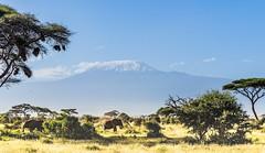 Amboseli National Park (Prashanth S) Tags: safari africansafari africa kenya parks wild wildlife safariphotography travel amboseli ambo nature natural herd elephants animals animal
