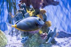 Voigtlander 50mm f/3.5 Heliar test shot (scrappydoggy) Tags: voigtlander 50mm heliar sony a7riii a7r3 techart aquarium fish zoo