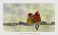 Love (Christina's World!) Tags: zebrawaxbill africa birds red yellow redbird textures africarocks sandiego california valentinesday valentine february 2019 exhibitionoftalent bokeh ngc