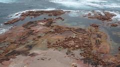 0352 Blick von den Klippen - view from the cliff top; Point Labatt (roving_spirits) Tags: australia australien australie southaustralia eyrepeninsula