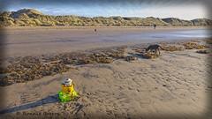 bizarre pollution (RCB4J) Tags: ayrshire ayrshirecoast babygrace clydecoast firthofclyde irvinebeach jakob rcb4j ronniebarron scotland siameselurcher sony1650mmf28dtssm sonyslta77v trailhound art dobermanterrier dogwalkingphotography dogs landscapes photography northayrshire unitedkingdom pollution detritus satire