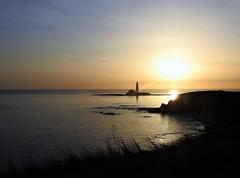 Silhouetted Coastline to St. Mary's (Gilli8888) Tags: nikon coolpix p900 coast coastal eastcoast northeast northumberland northsea seatonsluice lighthouse stmaryslighthouse stmarysisland batesisland silhouette silhouettephotography seaside sea sunrise dawn morning february light