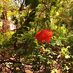 (Vipi Villa) Tags: sarataveres balance flowers garden tropical nature holiday landscape vacation instago instagood instatravel trip tourism travel travelgram travelawesome instapassport beautifuldestinations wonderfulplaces lifeonthemove picoftheday greatshot bestphotogram bestplacestogo worldplaces worldingram beautifulworld watamu flowerstagram