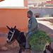 donkey and alfalfa - Road of the Kasbahs, Morocco - Nov 2018
