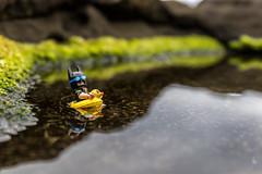 Time for a swim (Ballou34) Tags: 2017 7dmark2 7dmarkii 7d2 7dii afol ballou34 canon canon7dmarkii canon7dii eos eos7dmarkii eos7d2 eos7dii flickr lego legographer legography minifigures photography stuckinplastic toy toyphotography toys burntisland scotland royaumeuni gb stuck in plastic batman dc comics swim water lake moss