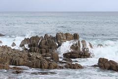 IMG_9791 (mudsharkalex) Tags: california pacificgrove pacificgroveca