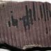 Calamites (fossil plant) (Breathitt Group, Middle Pennsylvanian; Jackson North Outcrop - Rt. 15 roadcut, Breathitt County, Kentucky, USA) 4