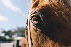 The horses (samineum) Tags: arena ranch barn farm mammals animals mammal reflection sun horses equestrian animal closeup pasture equine horse eye