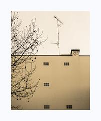 Smiley (hélène chantemerle) Tags: urbain ville cité immeuble façade antenne fenêtres chemimée arbre urban town city building front chimney windows antenna