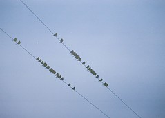 Birds on Wires, Fortrose, March 2016 (Mano Green) Tags: birds wire sky nature clouds scotland uk black isle 2016 winter 35mm film kodak gold 200 canon eos 300 70300mm lens fortrose