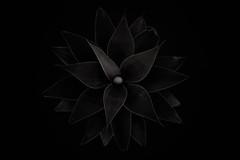 ponder my shame and despair in seclusion (Tony Macrellis) Tags: dark deviations darkdeviations bw blackandwhite blackwhite tonymacrellis agave plant pot despair shame macrellis tony