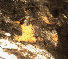 1547664372.506532 (jgdav) Tags: unexplained ancient quartz micro pigment image picrograph ochre light america
