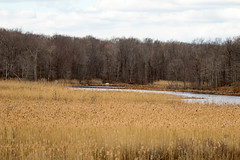7K8A2495 (rpealit) Tags: scenery wildlife nature weldon brook management area