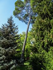arboles jardin del parque Campo del Moro Madrid 10 (Rafael Gomez - http://micamara.es) Tags: campodelmoro esp españa madrid arboles jardin del parque campo moro