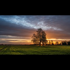 Sun rising between the trees (gaztotalmods) Tags: