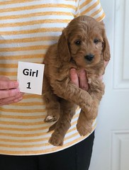 Baby Girl 1 3-30