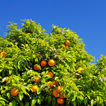 Orange thumbnail